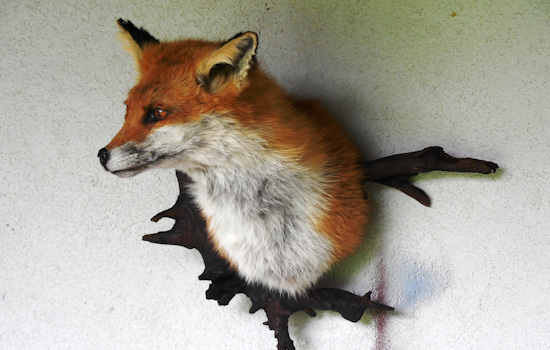 taxidermiste moselle